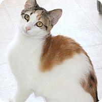 Adopt A Pet :: Calista - Dalton, GA