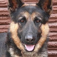 Adopt A Pet :: Adonis von Adorf - Los Angeles, CA
