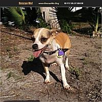 Adopt A Pet :: Armando - LaBelle, FL