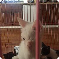 Adopt A Pet :: Bean - Naugatuck, CT