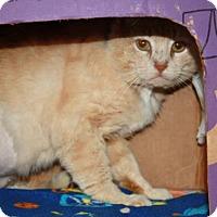 Adopt A Pet :: Barbosa - Richmond, VA