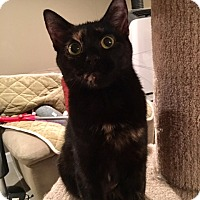 Adopt A Pet :: Neesha - Baltimore, MD