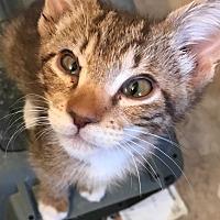 Adopt A Pet :: Nazboo - La puente, CA