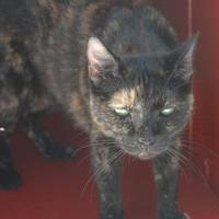 Adopt A Pet :: Marbles - New Iberia, LA