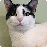 Adopt A Pet :: Claire - Breinigsville, PA