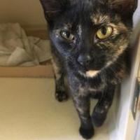 Adopt A Pet :: Monica - Winfield, KS