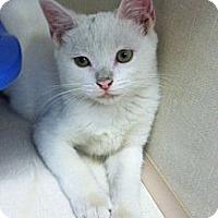 Adopt A Pet :: Sugar - Riverhead, NY