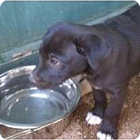 Adopt A Pet :: Daisy Mae - Coventry, RI