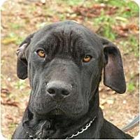 Adopt A Pet :: Tammy - Rigaud, QC