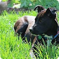 Adopt A Pet :: Kayla - Hastings, NY