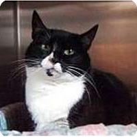 Adopt A Pet :: Tina - New York, NY
