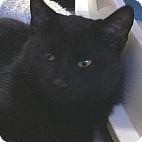 Adopt A Pet :: Stevie - Denton, TX