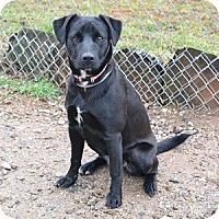 Adopt A Pet :: Merri - Athens, GA