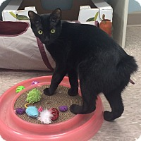 Adopt A Pet :: Jelly Bean - Byron Center, MI