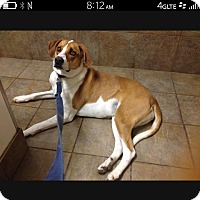 Adopt A Pet :: Ellie Mae - Bristol, TN