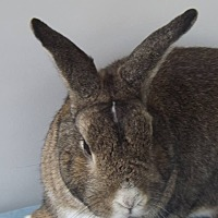 Mini Rex Mix for adoption in Hahira, Georgia - Chewy