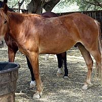 Adopt A Pet :: Corbin - El Dorado Hills, CA