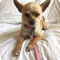 Adopt A Pet :: Eva - San Francisco, CA