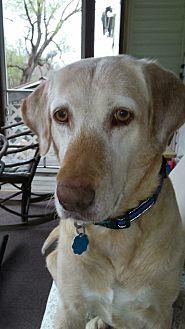 Labrador Retriever Mix Dog for adoption in Stahlstown, Pennsylvania - Cidney