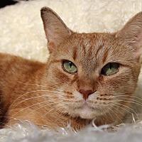 Adopt A Pet :: Betty - Wayne, NJ