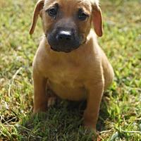 Adopt A Pet :: Oprah - Newark, DE