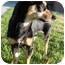 Photo 2 - Dachshund/Miniature Pinscher Mix Dog for adoption in Van Nuys, California - Pancho