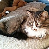 Adopt A Pet :: Topanga - Anchorage, AK