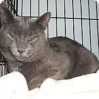 Adopt A Pet :: Jasper( affectionate) - Sterling Hgts, MI