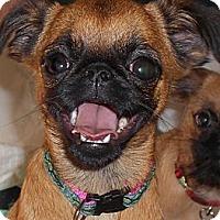 Adopt A Pet :: GIDGET - ADOPTION PENDING - Jackson, MS