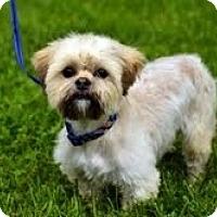 Adopt A Pet :: Theo - Toronto, ON