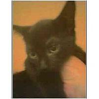 Adopt A Pet :: Lolita (mixed breed) - Owasso, OK