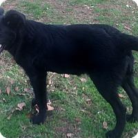 Adopt A Pet :: Mitchell - Smyrna, GA