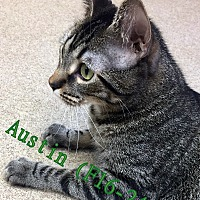 Adopt A Pet :: Austin - Tiffin, OH