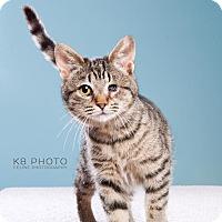 Adopt A Pet :: Pippa - Huntsville, AL