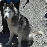 Adopt A Pet :: zero - Yucaipa, CA