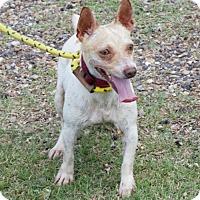 Adopt A Pet :: Taco - Abbeville, LA