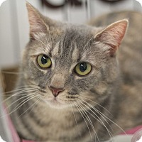Adopt A Pet :: Rogue - Richmond, VA