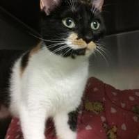 Adopt A Pet :: Elena - Wellsville, NY
