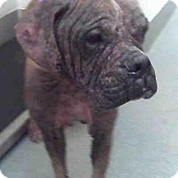 Adopt A Pet :: Matthew - Denver, CO