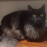 Adopt A Pet :: Chase - Thornhill, ON