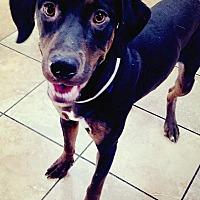 Adopt A Pet :: Eliott - Las Vegas, NV