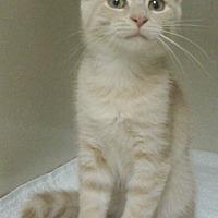 Adopt A Pet :: Tanner - Germansville, PA