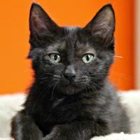 Adopt A Pet :: Emmy - Vinton, IA