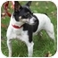 Photo 2 - Rat Terrier Mix Dog for adoption in PRINCETON, New Jersey - Shane