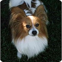 Adopt A Pet :: Charlie - San Diego County, CA
