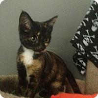 Adopt A Pet :: Prentiss - Monroe, GA