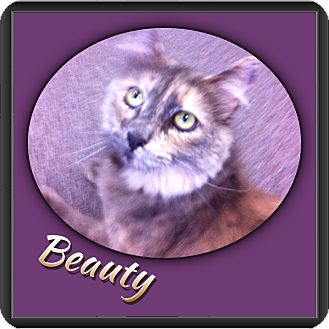 Calico Cat for adoption in Riverside, California - Beauty