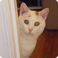 Adopt A Pet :: Duvall - Kensington, MD