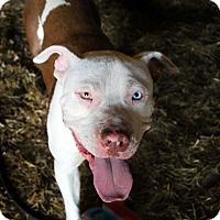 Adopt A Pet :: Jo Jo - Hixson, TN