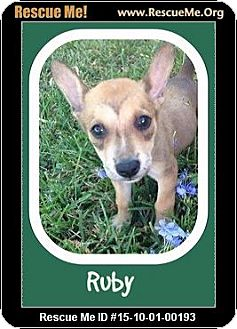 Shepherd (Unknown Type) Mix Puppy for adoption in Saddle Brook, New Jersey - Ruby
